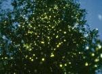 蛍の光でメリークリスマス!