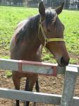 牧場の仔馬