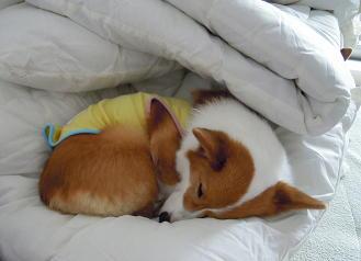 まだまだ冬眠したい(1)
