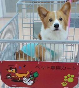 ペット専用カートin島忠