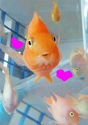 笑顔のお魚