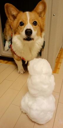 今年の初雪