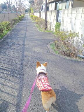 お散歩もすすみ