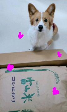 富山米キター