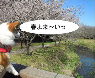 春よ来い(1)