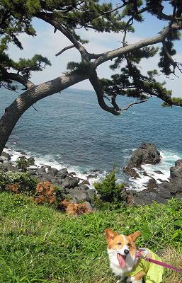 006城ヶ崎海岸