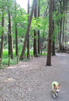 山一個分のお散歩コース