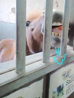 ニンジン食べる馬さん