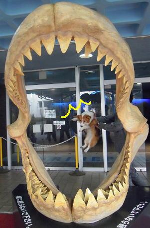 サメの歯の餌食(1)