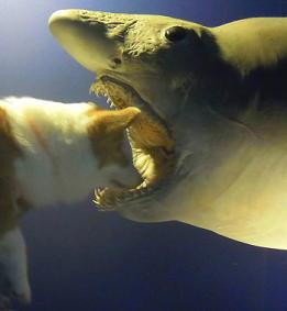 サメのはく製(1)