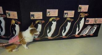 ペンギンと背比べ(1)(1)