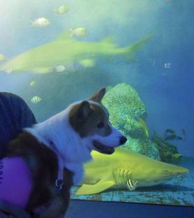 動いているサメも(1)