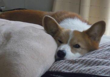 うめが寝てる間のことですが