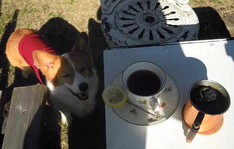 ハンバーグとお茶