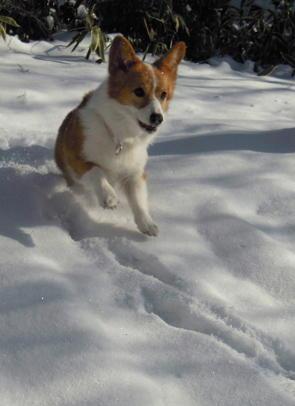 ちょっと登って雪遊び12