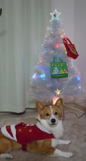 今年のクリスマスプレゼントは