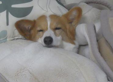 寝てる時に怒る(1)