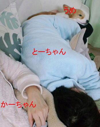 人間&わんこ団子