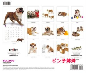 THE DOG (1)