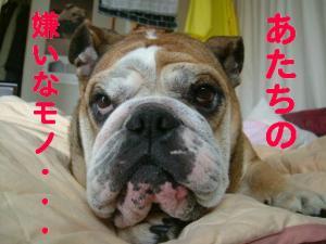 01日 ピン子遊び (6)
