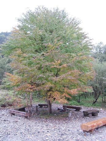 秋の涸沢 1 012