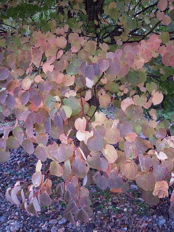 秋の涸沢 1 013