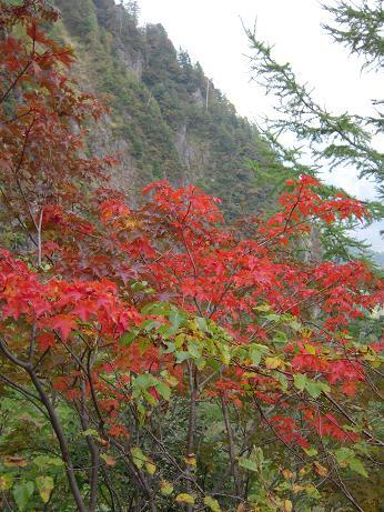 秋の焼岳 026