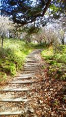 剣山登山道