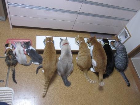 猫の食事1