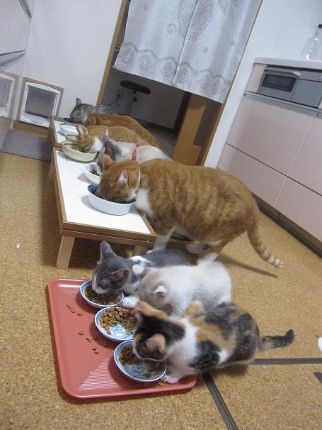 猫の食事2