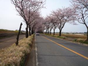 2009海軍道路