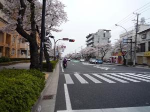 2009本牧通り