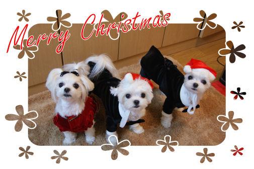 2008クリスマス1