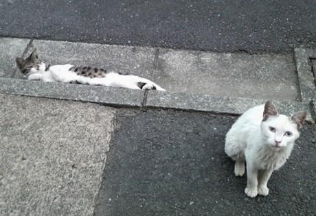 捨てられた猫