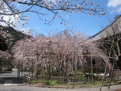 bisyamon_0420_4.jpg