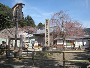 daigoji_0331_1.jpg
