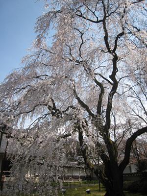 daigoji_0331_55.jpg