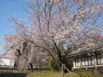 daigoji_0331_66.jpg