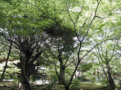 kajyuuji_0529_6.jpg