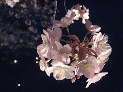 nijyo_0410_5.jpg