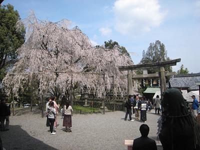 ooishi_0405_3.jpg