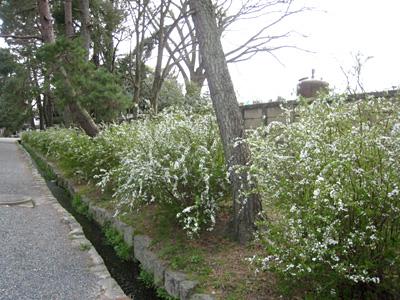 yukiyanagi_0327_1.jpg