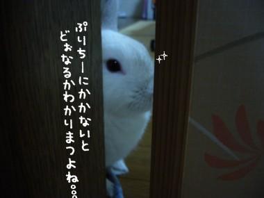 20051007171752.jpg