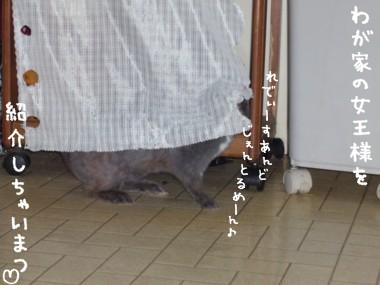 20051103183101.jpg