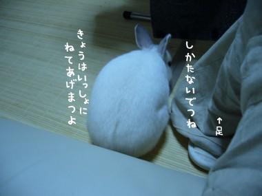 P1000180.jpg