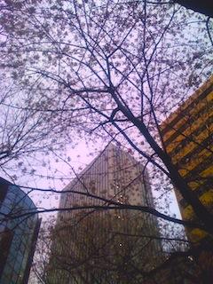 桜の間からサンシャインビルを見あげる