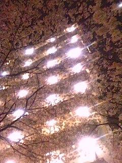大塚駅の近くの夜桜