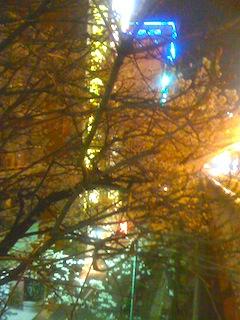 大塚の夜の桜