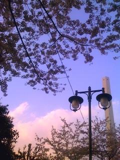 池袋駅前公園の桜