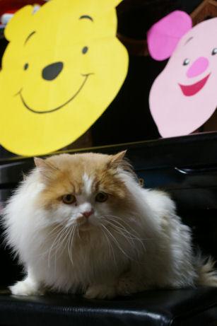 IMGP2873ー猫